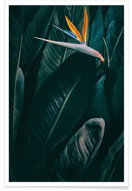Bird of Paradise affiche