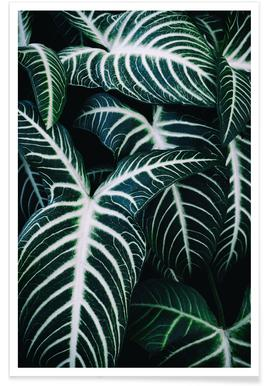 Jungle 2 -Poster