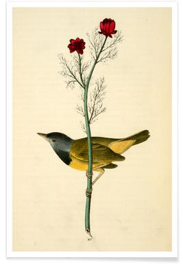 Mourning Ground-Warbler (by List Collection) Poster