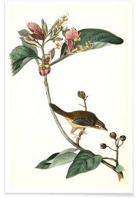 Bachman's Pinewood Finch (by List Collection) Poster