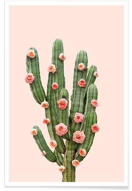 Cactus Roses affiche