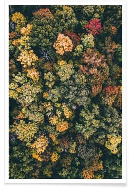 Autumn Trees Aerial Photograph Poster