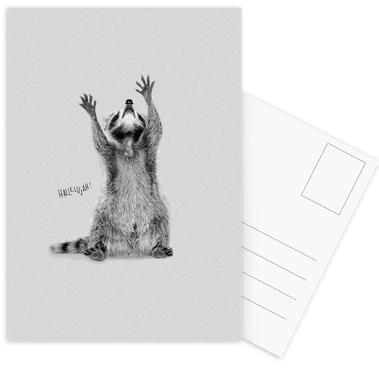 Racoon cartes postales