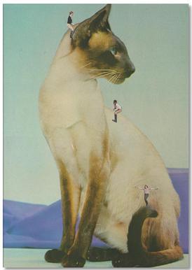 Siamese Mega Cat Notepad