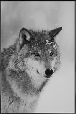 The Wolf affiche encadrée