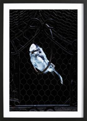 Birds Everywhere 5 ingelijste print
