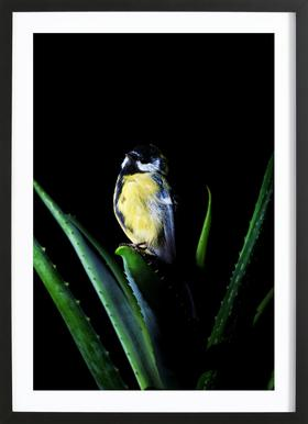 Birds Everywhere 6 ingelijste print
