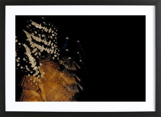 Butterflies 1 Framed Print