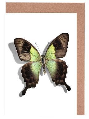 Butterflies 6 Greeting Card Set
