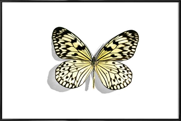 Butterflies 7 Framed Poster