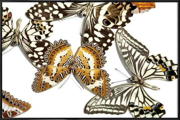 Butterflies 9 Framed Poster