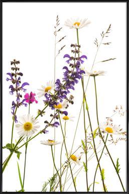 Flora - Margerite ingelijste poster
