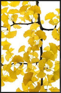 Flora - Ginko -Bild mit Kunststoffrahmen