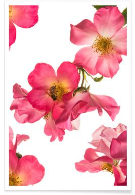 Flora - Rose 2 Affiche