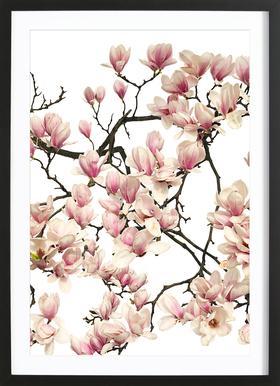 Flora - Magnolie Affiche sous cadre en bois