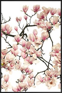 Flora - Magnolie Poster im Kunststoffrahmen