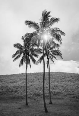 Palme Osterinsel -Acrylglasbild