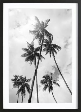 Palme Bounty -Bild mit Holzrahmen
