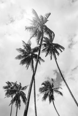 Palme Bounty -Acrylglasbild