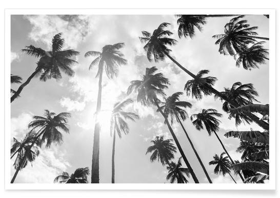 Palmenhain Affiche