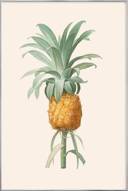Ananas Poster im Alurahmen