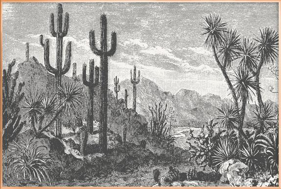 Cacti in Mountains Poster in Aluminium Frame