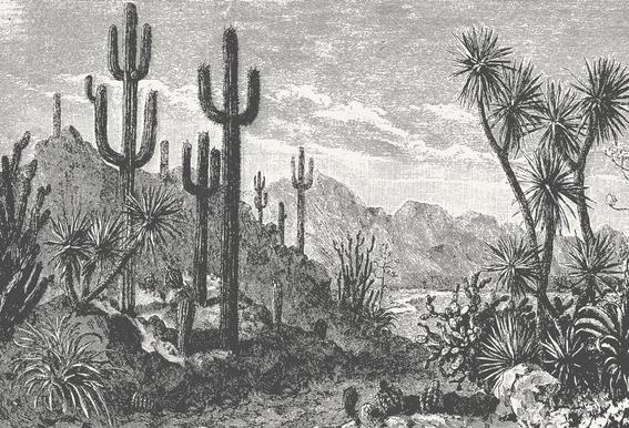 Cacti in Mountains Alu-Dibond Druck