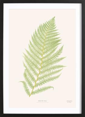 Ferns 2 Poster in Wooden Frame