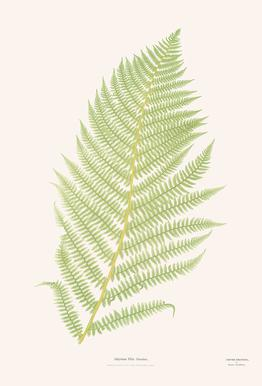 Ferns 2 -Acrylglasbild