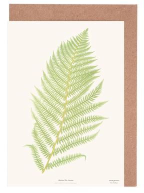 Ferns 2 Grußkartenset