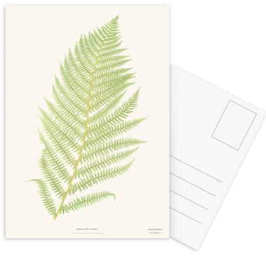 Ferns 2 Postcard Set