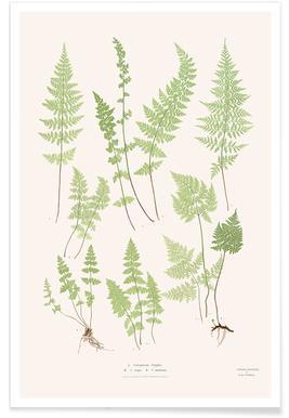 Ferns -Poster