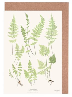 Ferns Grußkartenset