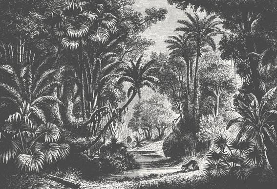 Indian Jungle Acrylic Glass Print