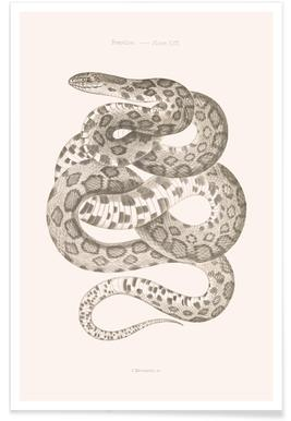 Reptiles - Plate XXII Poster