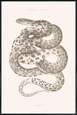 Reptiles - Plate XXII Poster im Kunststoffrahmen
