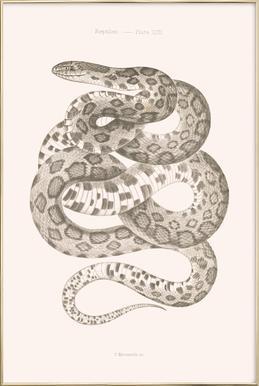 Reptiles - Plate XXII Poster im Alurahmen
