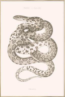 Reptiles - Plate XXII Poster in Aluminium Frame