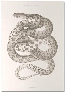 Reptiles - Plate XXII Notepad