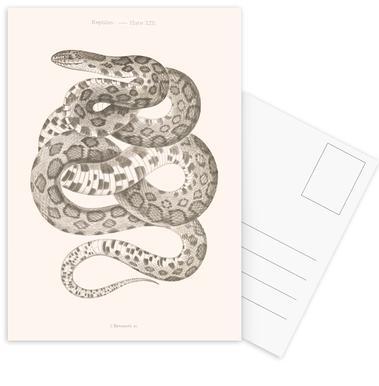 Reptiles - Plate XXII Postkartenset