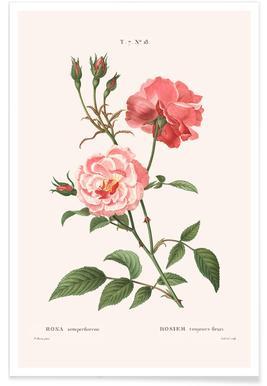 Rosier - Toujours Fleuri Poster