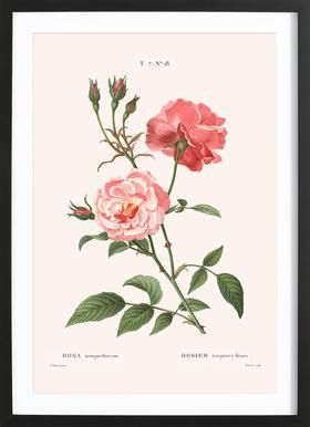 Rosier - Toujours Fleuri -Bild mit Holzrahmen