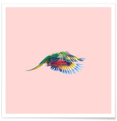 Pink Parrot Affiche