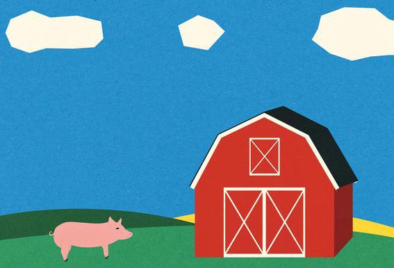 Pig and Barn Plakat af aluminum