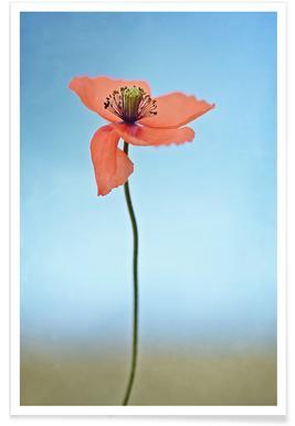 Red Poppy Affiche