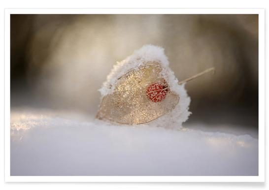 Physalis in Snow Poster