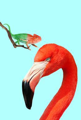 Colorful Friends Impression sur alu-Dibond