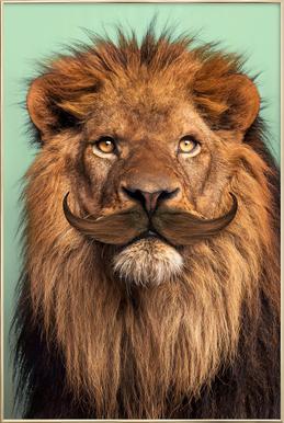 Bearded Lion Poster in Aluminium Frame