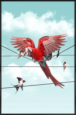 Colourful Stranger Poster in kunststof lijst