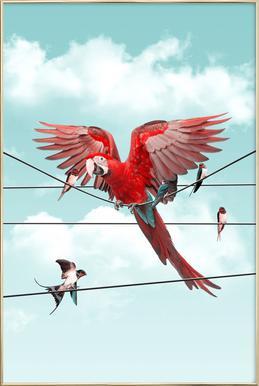 Colourful Stranger -Poster im Alurahmen